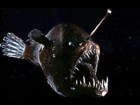 фото рыба чёрт