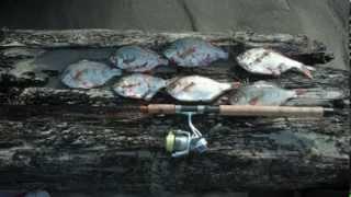Oregon surf perch by 94smokercraft 2016 06 28 for Surf perch fishing oregon