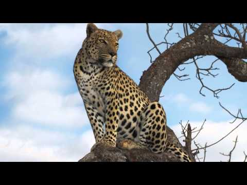 Teen tours of South Africa: Service, Adventure and Safari