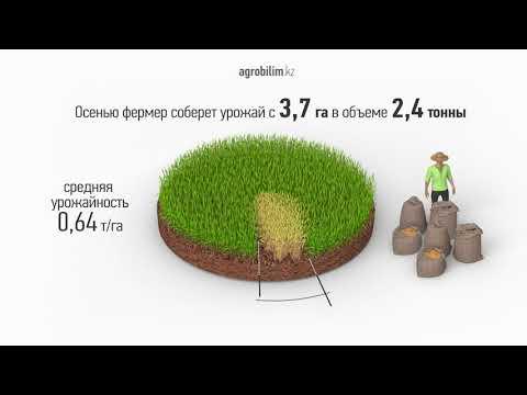 Новый механизм субсидирования семеноводства