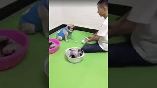 Собака у которой сто процентов развита интуиция