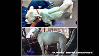 Unbelievable Before & After Rescue Dog Transformations