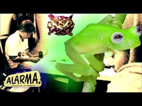 Sekta Core! - Ruperta/Fantasma de La Rana (VIVE LATINO 2000 ft. KOTARDO)