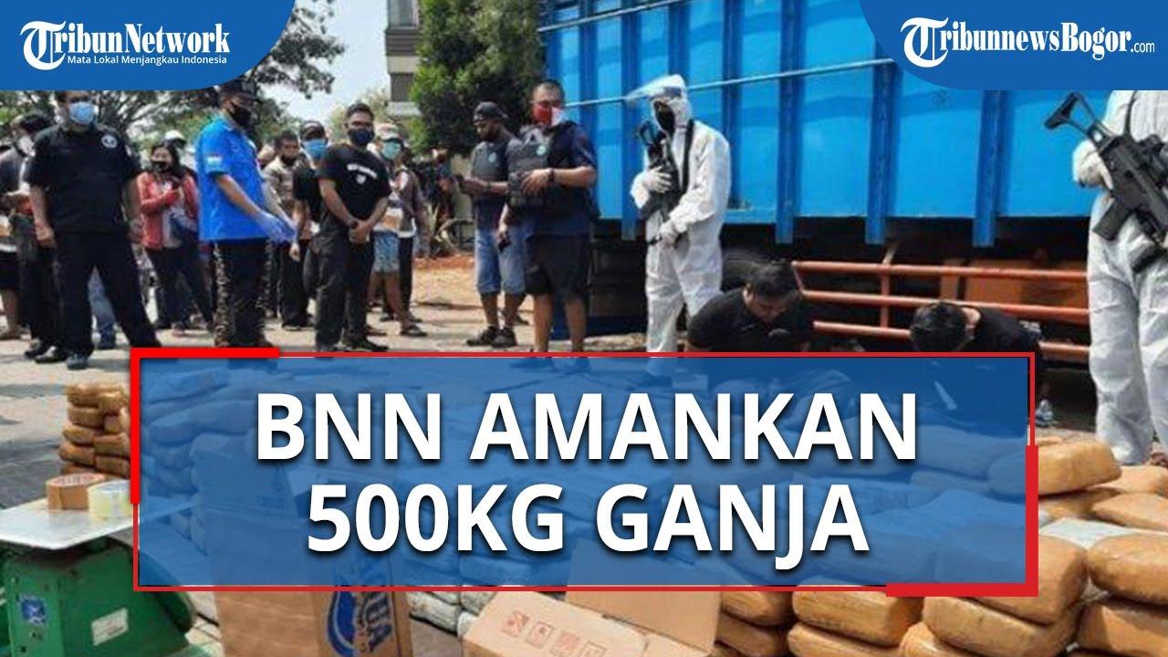 BNN Ungkap Penyelundupan Ganja Seberat 500 Kilogram di Dalam Tumpukan Pisang di Bekasi