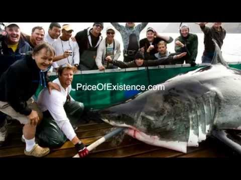 Sinking Away: The OCEARCH Maya Cover UP