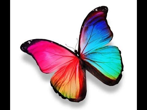 Tero - Schmetterling (бабочка)
