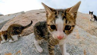 岩の隙間から次々と出てくる子猫が可愛過ぎる