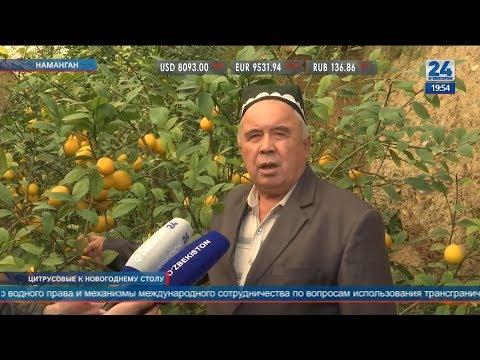 Выращивание лимонов в Намангане