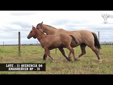 LOTE   21 QUERENCIA DO AMANHERCER RP   70