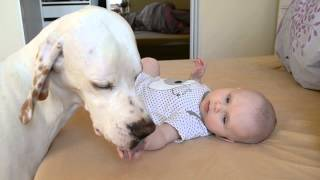 English Pointer with baby