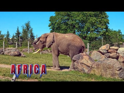 Granby Zoo - Africa Trail - Granby - Quebec - Canada
