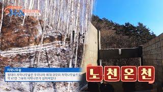 [겨울 여행지 추천] 힐링 천국! 인제 자작나무 숲+ …