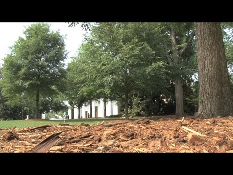 Ranger Nick: Tree Planting Program Important To UGA Campus in Athens
