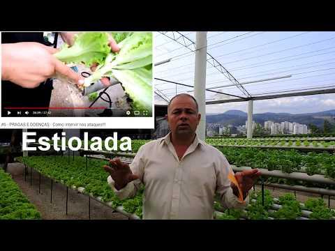 Cultivos de hortalizas de YouTube · Duração:  5 minutos 4 segundos