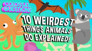 10 Weirdest Things Animals Do Explained! | COLOSSAL QUESTIONS