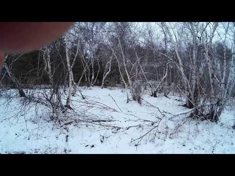 выделить обрезать щобор подранка лося по снегу видеограф свадьбу