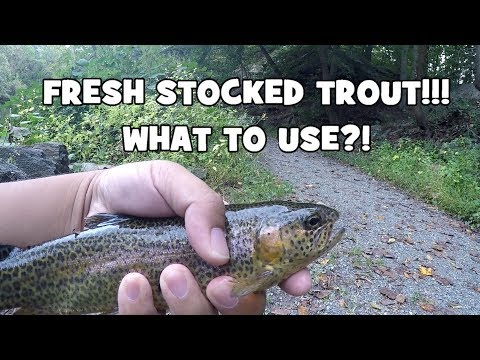The BEST BAIT For FRESH STOCKED TROUT?! Fall Trout Fishing 101! (Philadelphia, PA)