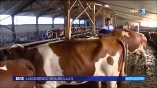 12/13 France 3 Languedoc-Roussillon : crise laitière Juillet 2015