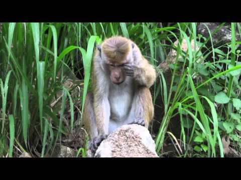 Sri Lanka through my camera lens