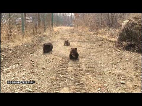 شاهد: ثلاثة دياسم في حديقة حيوان روسية بعد إنقاذها من الصيد غير الشرعي…  - نشر قبل 2 ساعة