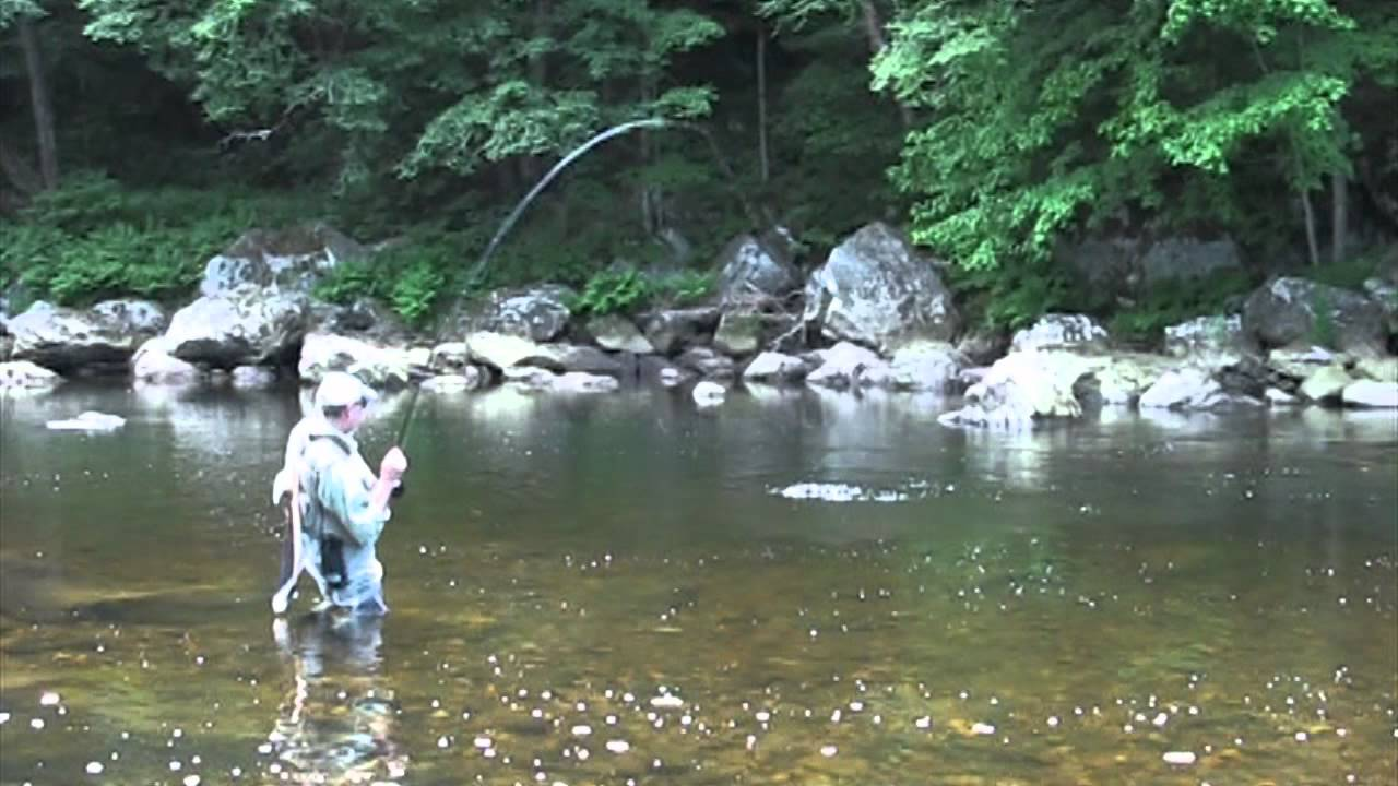 Fly fishing the deerfield river the berkshires in for Mass fishing report
