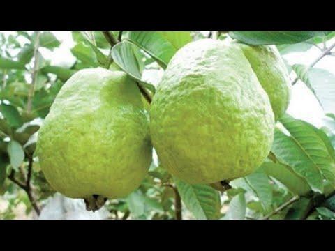 top-10-melhores-frutas-para-diabeticos