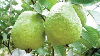 10 Melhores Frutas para Diabéticos