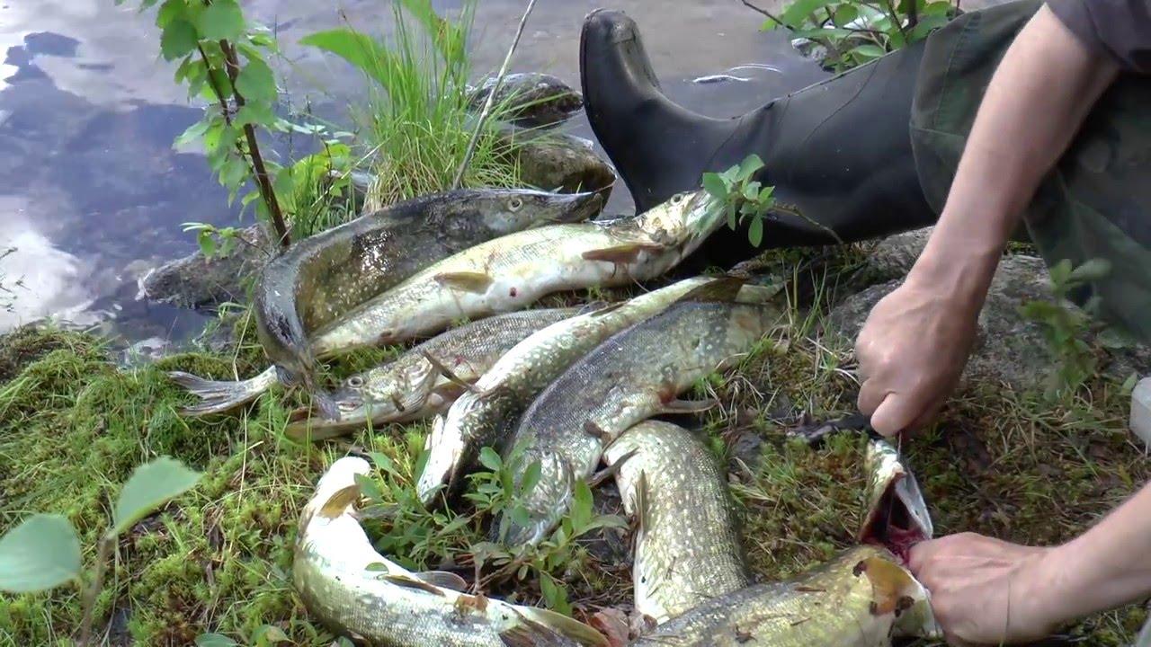 рыболовные путешествия кольский п ов северная карелия