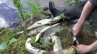 Рыболовное путешествие: Кольский полуостров, северная Карелия, залив Белого моря