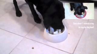 Martha Stewart Slow Feeder Dog Bowl Review