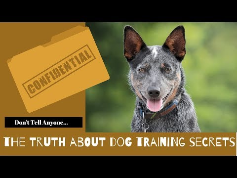 The Truth About Dog Training Secrets!!!