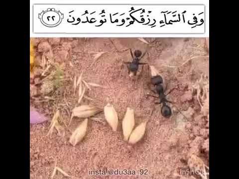 قصة نملة ،،سبحان الله