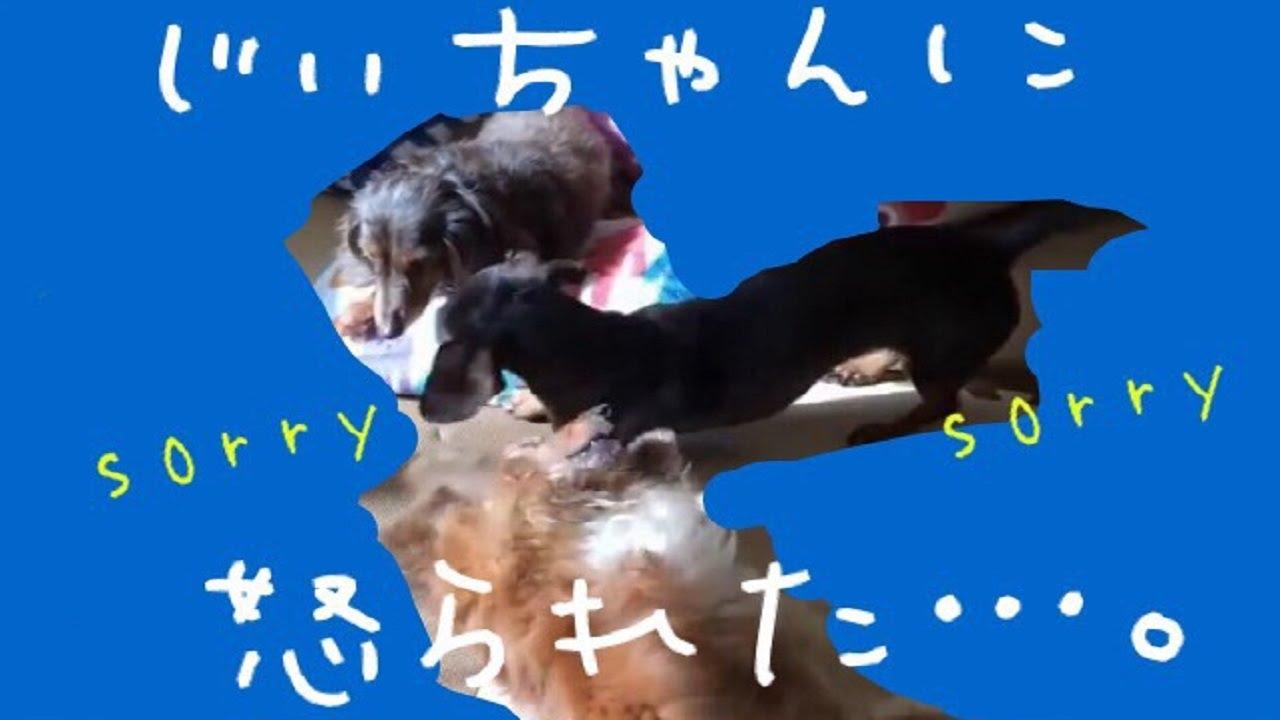 So cute puppies wallpaper 15897245 fanpop -  Shut Up Smooth Daks Choco Youtube