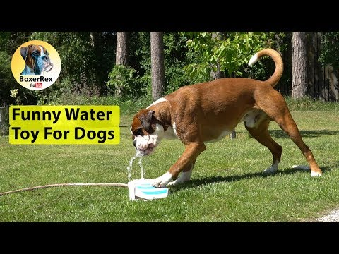 Funny Water Toy For Dogs 😂 Endless Hours Of Fun!