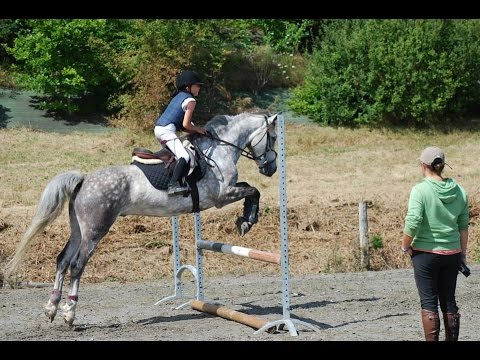 Cours Equitation Galop 3
