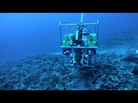 This harpoon-throwing robot is designed to hunt destructive lionfish