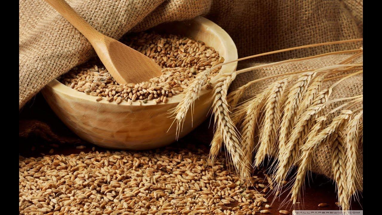 Брага из пшеницы.  Быстрый и простой рецепт. Самая правильная брага из пшеницы.