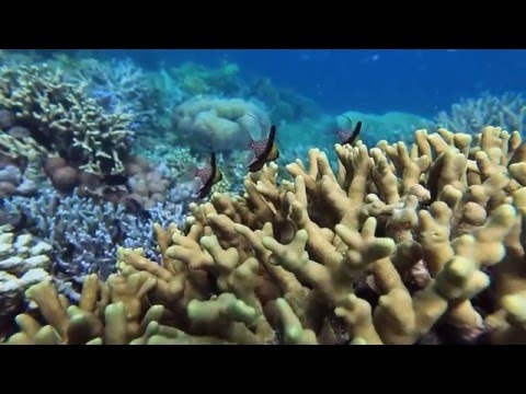 Natural History of the Caribbean Corals by Ocean First Education