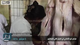 مصر العربية | مراحل ذبح الأضاحي في المجزر الآلي بالبساتين