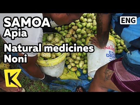 【K】Samoa Travel-Apia[사모아 여행-아피아]약재로 사용되는 과일 노니/Morinda citrifolia/Noni/Natural medicines
