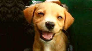 СОННИК - Собака