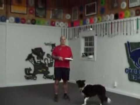 "Disc Dog Training "" The Butterfly Throw"""