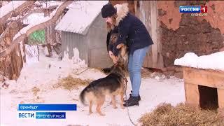 Смотреть видео С 1 января в России действует закон об ответственном отношении к животным онлайн