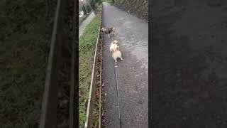 Hundelufter i Danmark - Dog walker in Denmark hund dog
