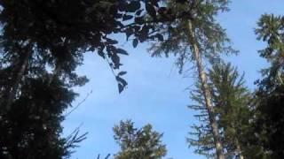 Pesem ptic pohorskih
