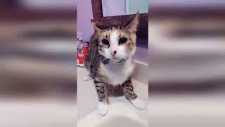 КОШКИ 2019 Смешные коты приколы с котами до слез – Смешные кошки 2019 – Funny Cats / Видео
