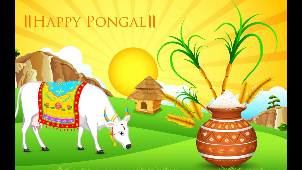 Pongal Pongal 2017 Pongal Festival Pongal
