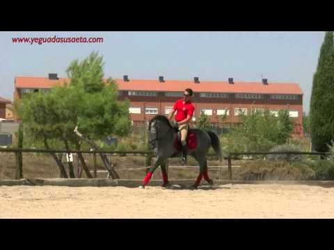 LIGON SU-PURE SPANISH HORSES FOR SALE