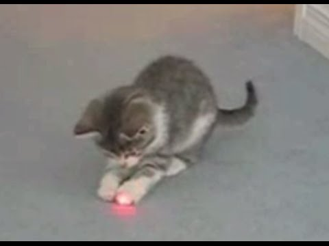 Captivating Cats Chasing Laser Pointers Compilation Awesome Design