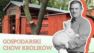 GOSPODARSKI CHÓW KRÓLIKÓW - HODOWLA TADEUSZA MAZURKA